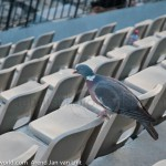 Roland Garros 2011 sfeerimpressie 8210